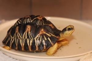 Tortoise 5