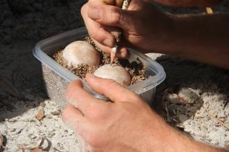 Tortoise eggs 7 10.31.15