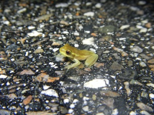 Photo courtesy of Matt Ratcliffe