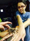 educational tarantula